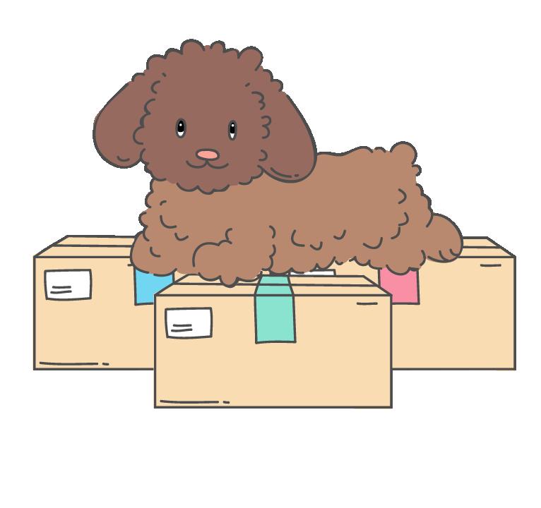 psík na bax box